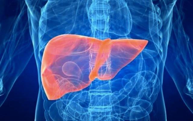 UNAM patenta medicamento para proteger hígado de personas con SIDA - hígado sida unam medicamento