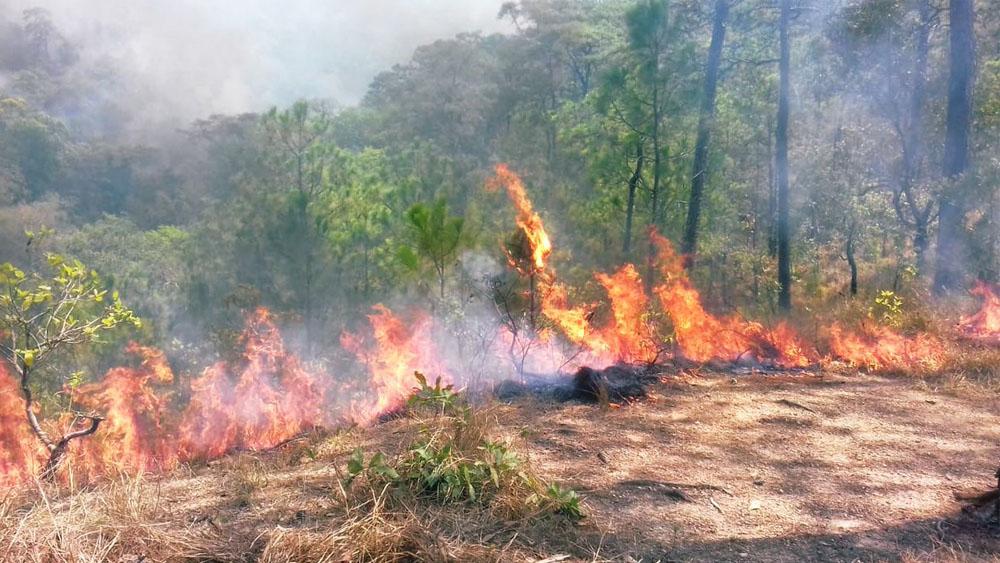 Siete incendios activos en Oaxaca. Noticias en tiempo real
