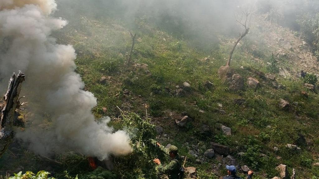 Plantíos incinerados. Foto de Milenio