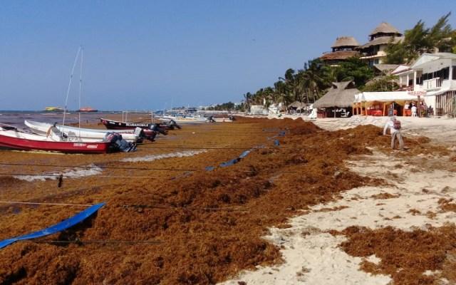 Presentarán plan de acción contra el sargazo la próxima semana - Sargazo en playas de Quintana Roo. Foto de Quintana Roo Hoy