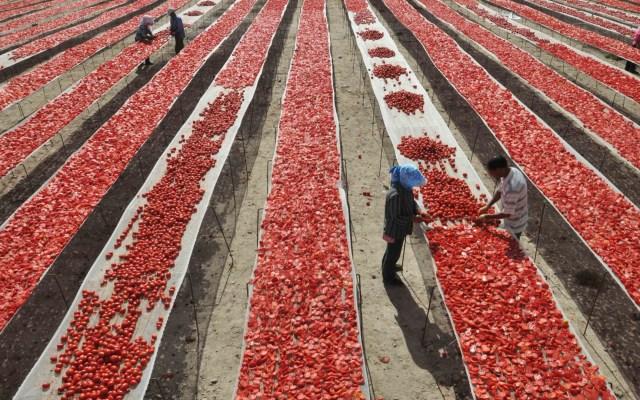 """""""No hemos tirado la toalla"""": tomateros mexicanos sobre arancel de EE.UU. - tomateros acuerdo tomate estados unidos"""