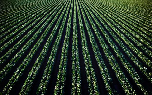 Científicos de la UNAM analizan fertilidad del suelo a partir de la materia orgánica - Foto de Photo Tim Mossholder para Unsplash