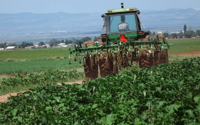 Piden legisladores de Morena a gobierno federal reconsiderar despido de trabajadores - agricultura en México