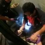 #Video Rescatan a cachorro atorado en tubería del drenaje - El cachorro fue bautizado como 'Bomberito'. Captura de pantalla