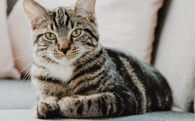 Nueva York podría prohibir la extirpación de uñas de los gatos - Foto de Erik-Jan Leusink @ejleusink