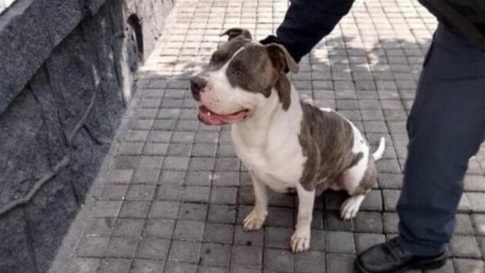 "Policía capitalino ""secuestra"" a perro en alcaldía Cuauhtémoc - Foto de @c4jimenez"
