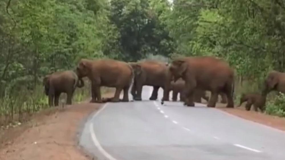 Elefante carga a bebé fallecido en medio de una procesión #VIDEO