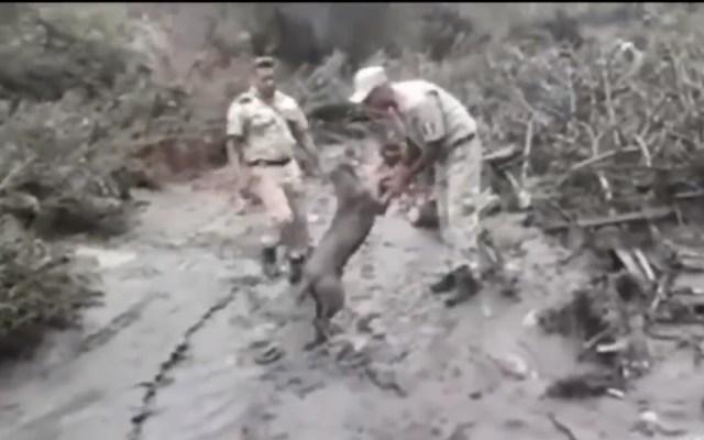 #Video Perro agradece ser rescatado tras desborde de río en Jalisco - Rescate de perro tras desbordamiento de río en Jalisco. Captura de pantalla
