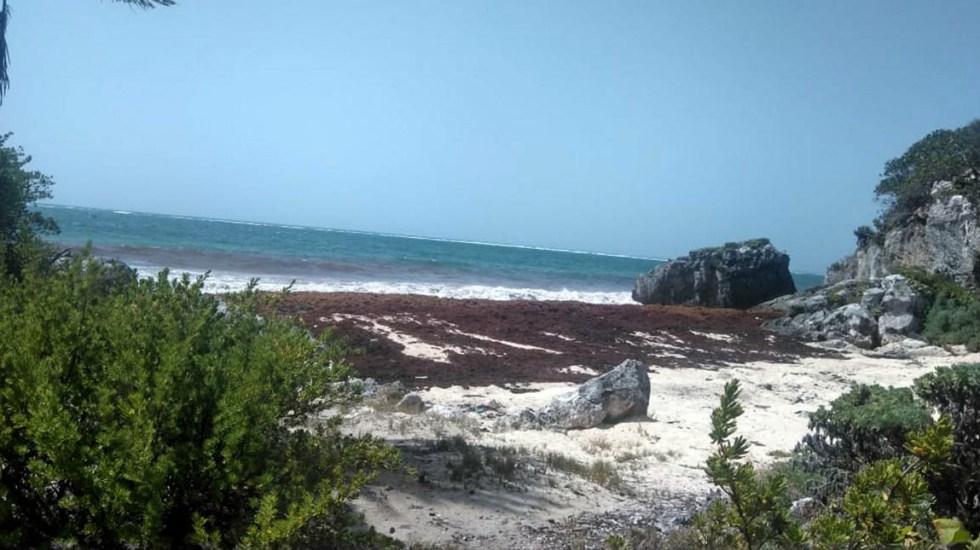 Sargazo en Quintana Roo se percibe como un problema nacional: Mitofsky - Sargazo Cancún Quintana Roo