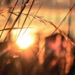 Mayo de 2019 fue el cuarto mes más caluroso en 140 años - Sol. Foto de Rose Erkul / Unsplash