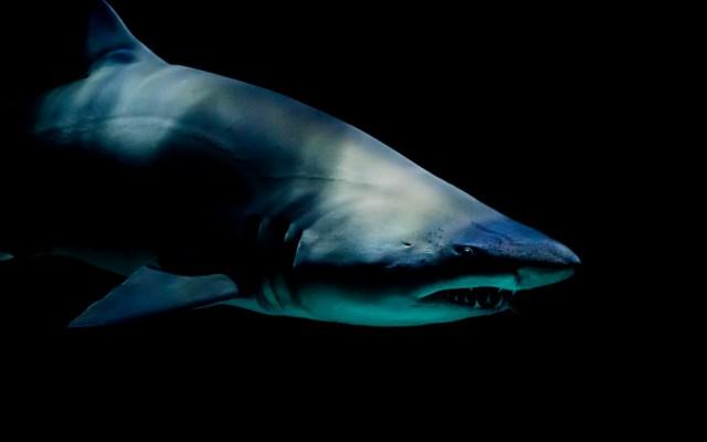 Greenpeace alerta sobre sobrepesca de tiburones en el Atlántico Norte - Foto de Laura College para Unsplash