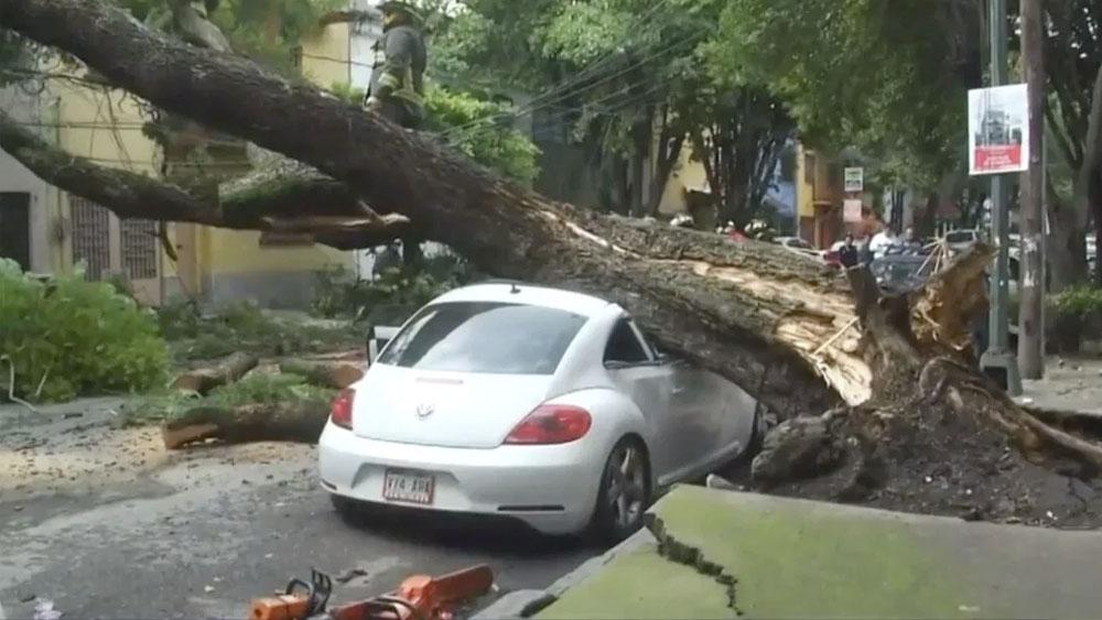 Cae árbol sobre automóvil en la colonia Condesa - árbol caído condesa