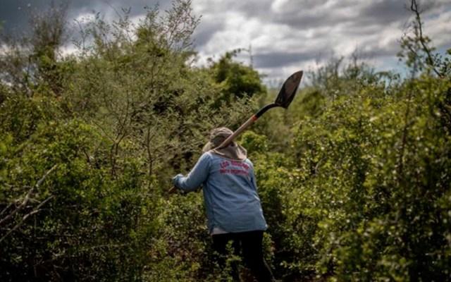 Asesinan a activista dedicada a la búsqueda de personas en Michoacán - asesinato activista michoacán