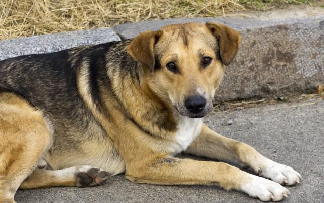 ¿Cómo evitar que haya perros en situación de calle? - Foto de Pixabay.