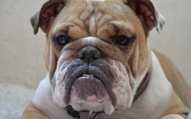 Cuatro de cada 10 perros y gatos en el mundo tienen obesidad - Foto de Pixabay.
