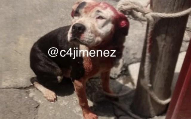 Muere niño de dos años por ataque de perro en Iztapalapa - Foto de @c4jimenez