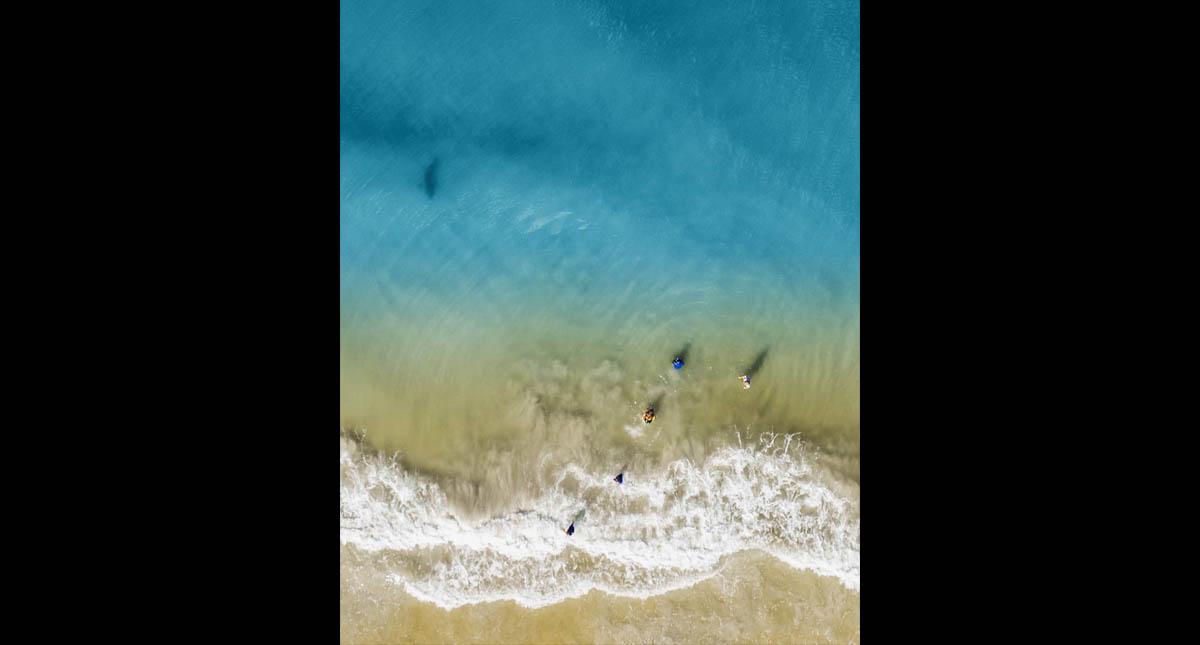 Mundo Web: Fotografía a su familia desde el aire y registra a un tiburón acechándola