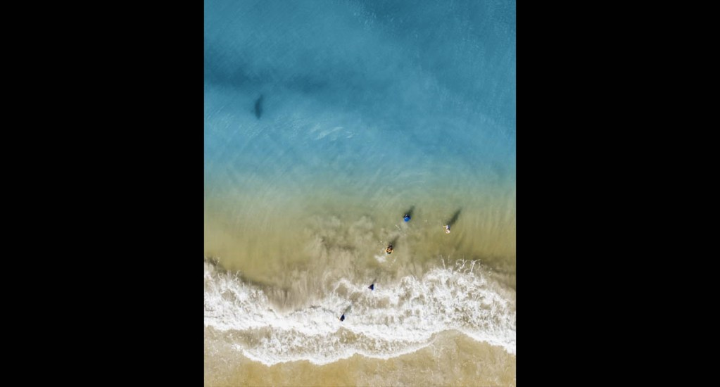 Padre capta con su dron a tiburón acercarse a su familia en playa de Florida - Tiburón playa familia Florida