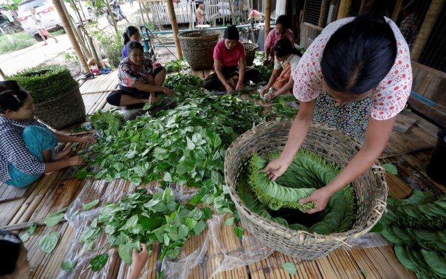 """""""Kun ya"""", el 'chicle' cancerígeno que no pasa de moda en Birmania - Foto de EFE."""