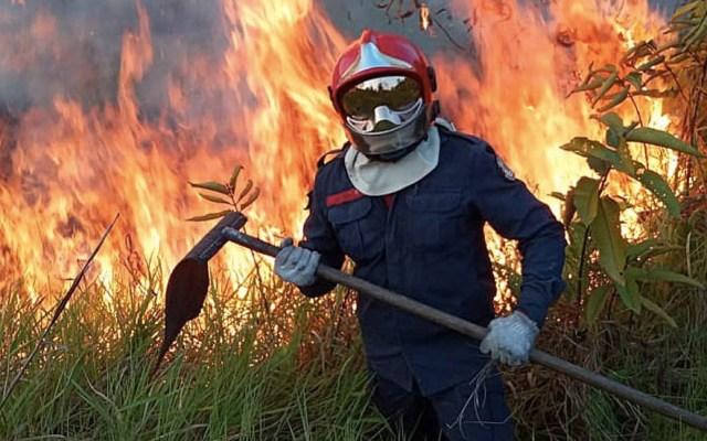 Chile ofrece ayuda para combatir incendio en Amazonas - Amazonas amazonia brasil incendio incendios