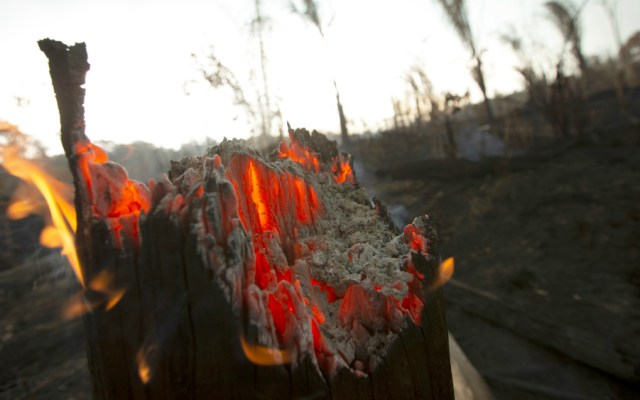 Canadá enviará avión cisterna para combatir incendio en Amazonia - Foto de EFE