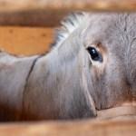 Encarcelan a burro en comunidad de Zimatlán, Oaxaca