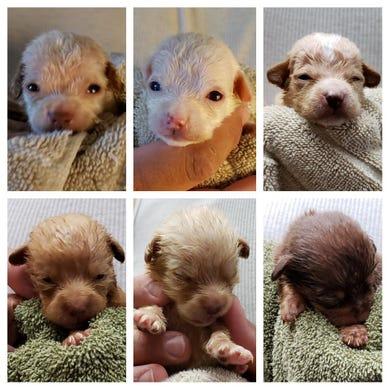 Cachorros sobrevivientes. Foto de Riverside County Animal Services