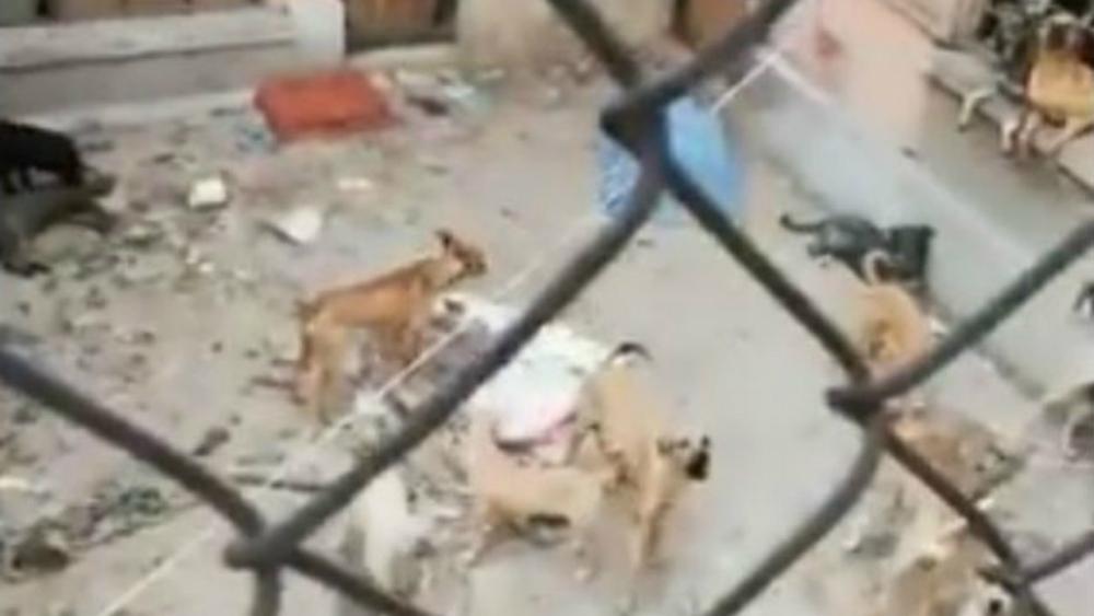 Autoridades de la Ciudad de México rescatan a perros maltratados en Lindavista - Perros abandonados Lindavista CDMX
