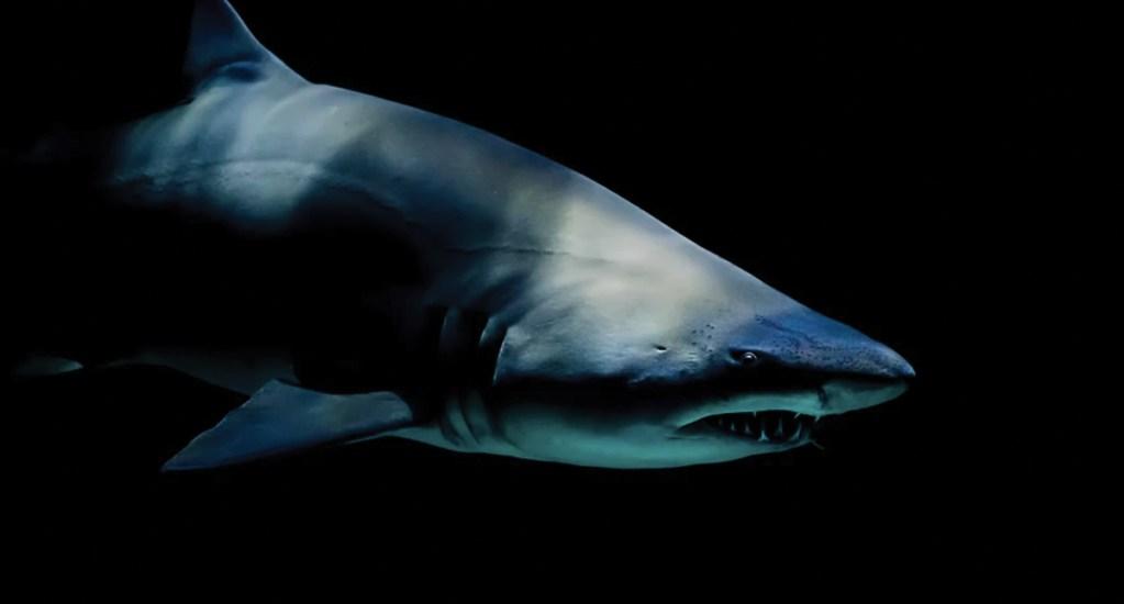Confirman tres ataques de tiburones en 24 horas en Florida - Foto de Laura College @laura_college