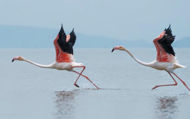América del Norte perdió 3 mil millones de aves en casi 50 años - Foto de Dattatreya Patra @dattatreyapatra