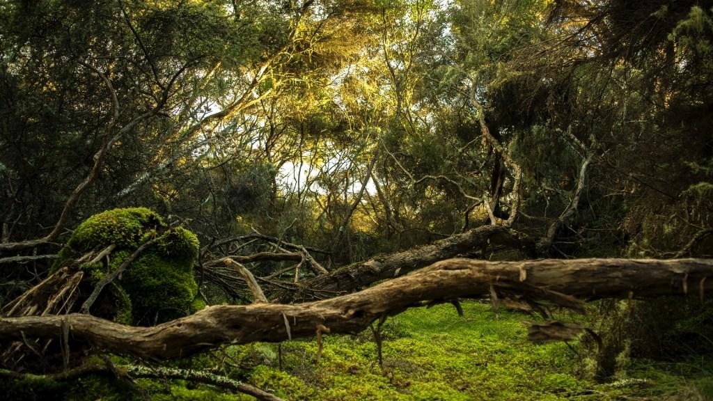 ONG sentencia que pérdida de bosques es 'creciente' y 'devastadora' - Bosque. Foto de Karl Anderson / Unsplash