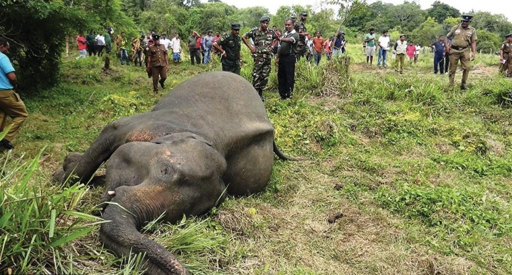 Envenenan elefantes para evitar destrucción de cultivos en Sri Lanka - Foto de Daily Mail