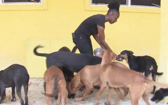 Mueren 220 perros y 50 gatos en albergue de Bahamas por Dorian - Foto de Fox 13