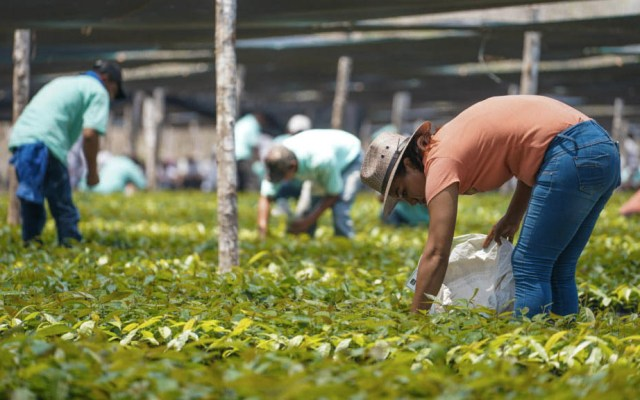 Guatemala recibirá 30 mdd de México para reforestar la frontera - Sembrando Vida programa México