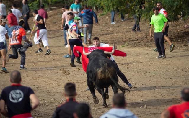 Festejo del Toro de la Vega - Participantes en el festejo del Toro de la Vega que la villa de Tordesillas (Valladolid) que forma parte de las fiestas patronales de la localidad y que este año protagoniza el toro de nombre