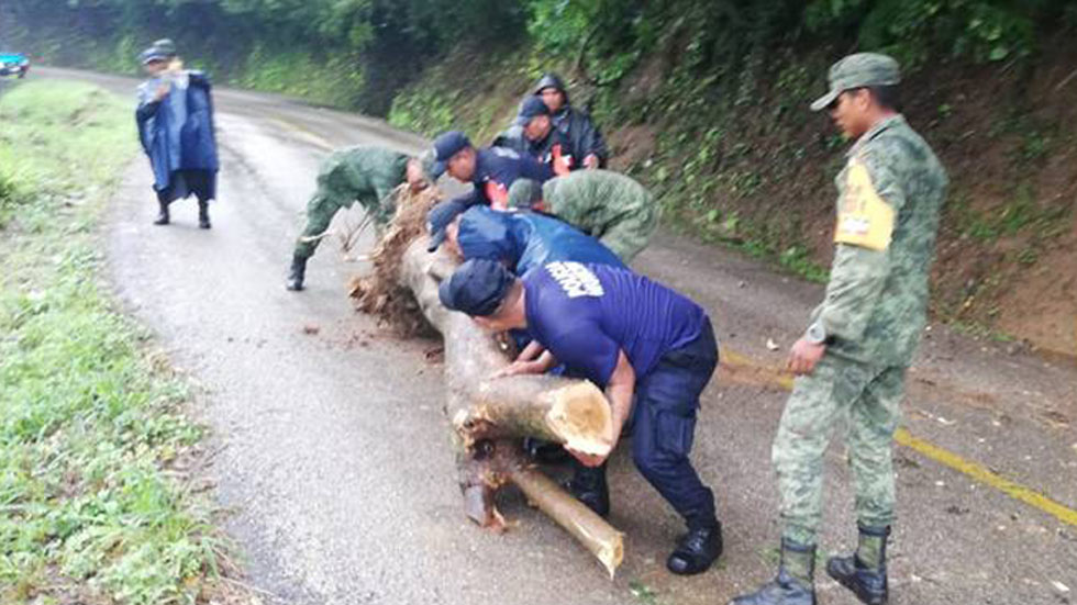 Retiro de árbol de una carretera de Oaxaca. Foto de Sedena