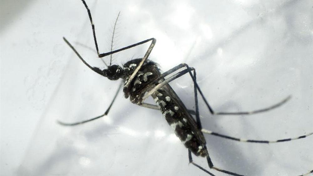 COVID-19se suma a riesgo sanitario de dengue, zika y chikunguña en México - dengue