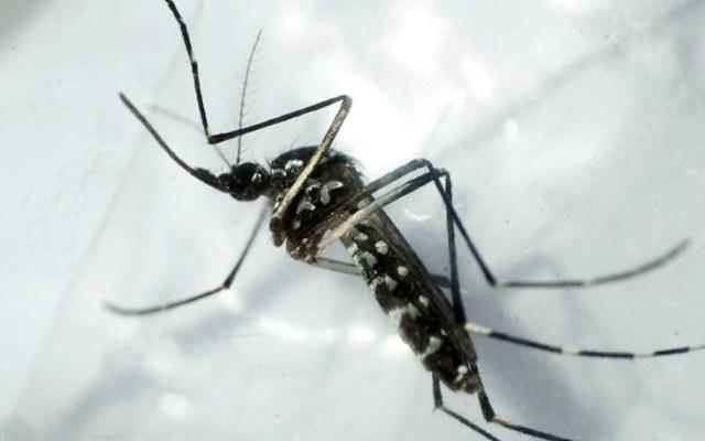 El dengue azota Latinoamérica mientras medios se centran en coronavirus - dengue