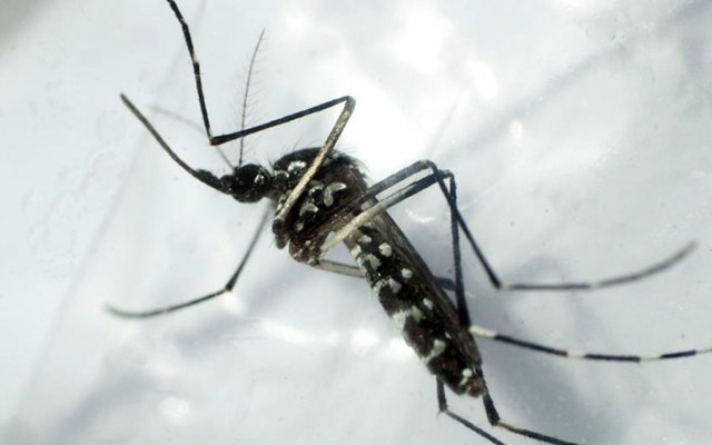 Detectan primer caso de dengue por transmisión sexual en Europa - dengue