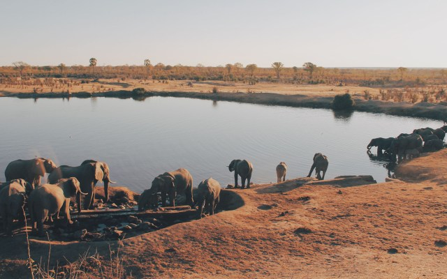 Hambruna mata a 200 elefantes en parque de Zimbabue - Manada de elefantes en Parque National Hwange de Zimbabue. Foto de Christine Donaldson / Unsplash