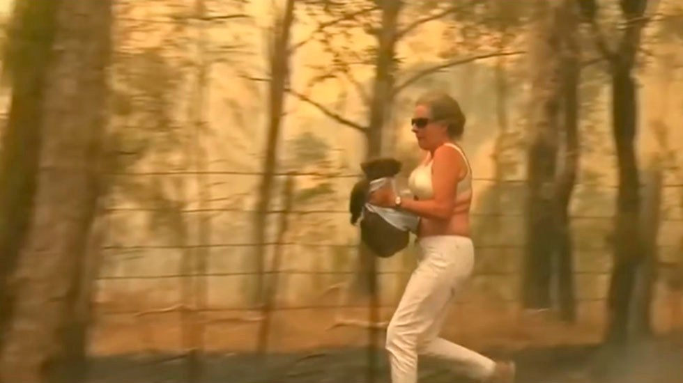 #Video Mujer salva a koala de incendio en Australia - Mujer salva a koala. Captura de pantalla