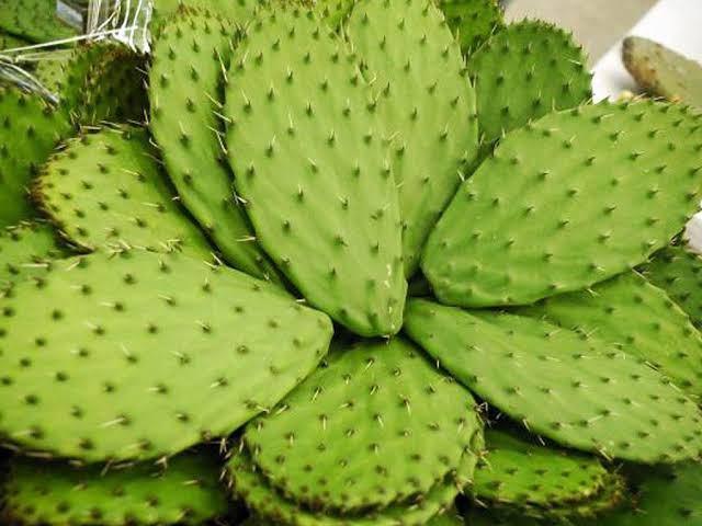Cinco superalimentos originarios de México