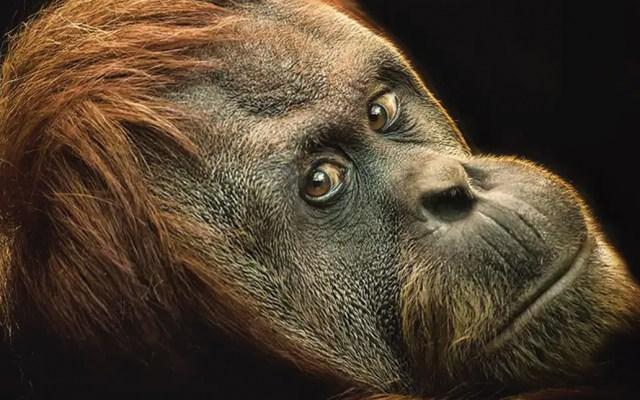 Investigación de moléculas en un diente da datos acerca de la evolución - Foto de Getty Images