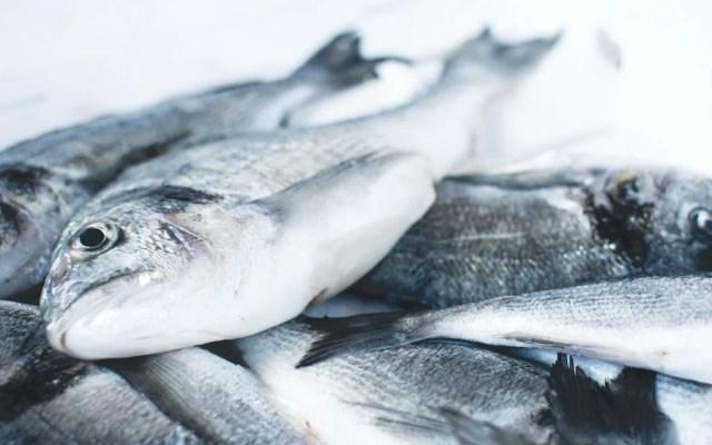 Alertan por presencia de mercurio en pescados y mariscos - Alertan por presencia de mercurio en pescados y mariscos