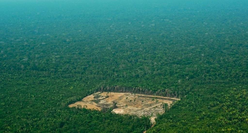 Aumenta más de 200 por ciento tasa de deforestación del Amazonas - Deforestación del Amazonas