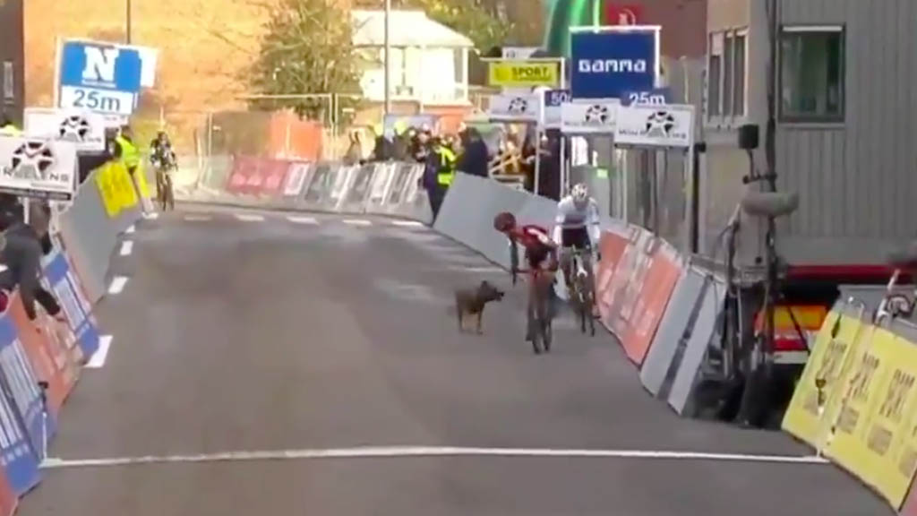 #Video Perro interrumpe carrera de ciclismo en Europa - Perro carrera ciclismo Bélgica