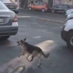 #Video Perro corre tras coche de mujeres que lo abandonaron en la Ciudad de México