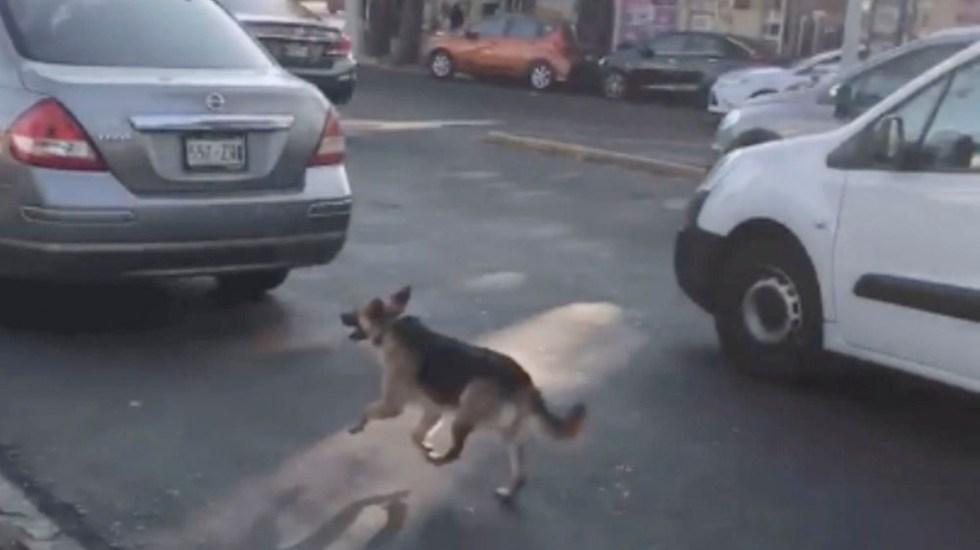 #Video Perro corre tras coche de mujeres que lo abandonaron en la Ciudad de México - #Video Perro corre tras coche de mujeres que lo abandonaron