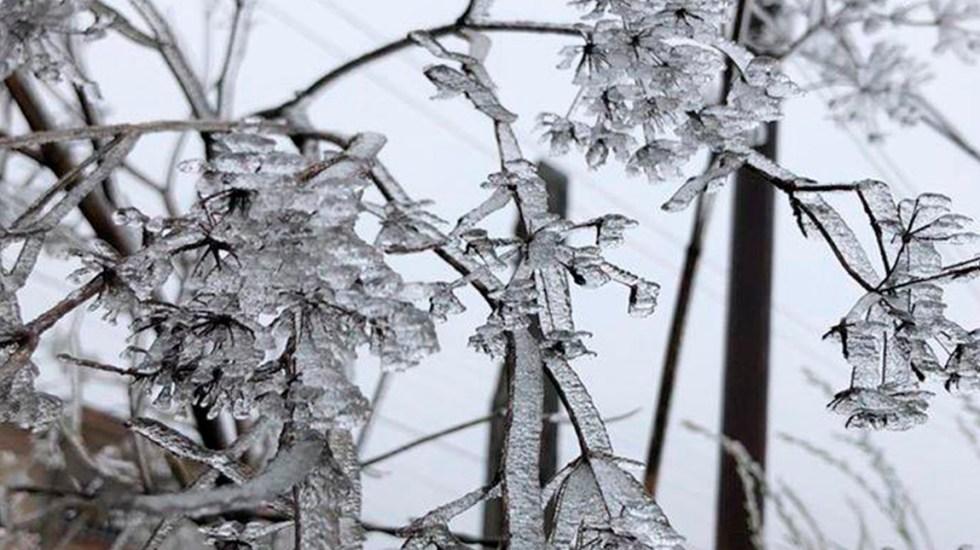 Prevén heladas en ocho municipios de Veracruz por Frente Frío 23 - Ramas de árbol congeladas por frío en Perote, Veracruz. Foto de @GacetaMexicana