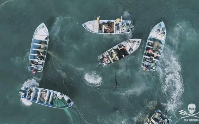 #Video Denuncian nuevo método para capturar totoaba en Baja California - Totoaba México pesca